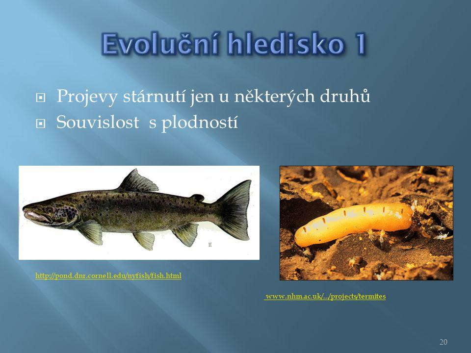  Projevy stárnutí jen u některých druhů  Souvislost s plodností http://pond.dnr.cornell.edu/nyfish/fish.html www.nhm.ac.uk/.../projects/termites 20