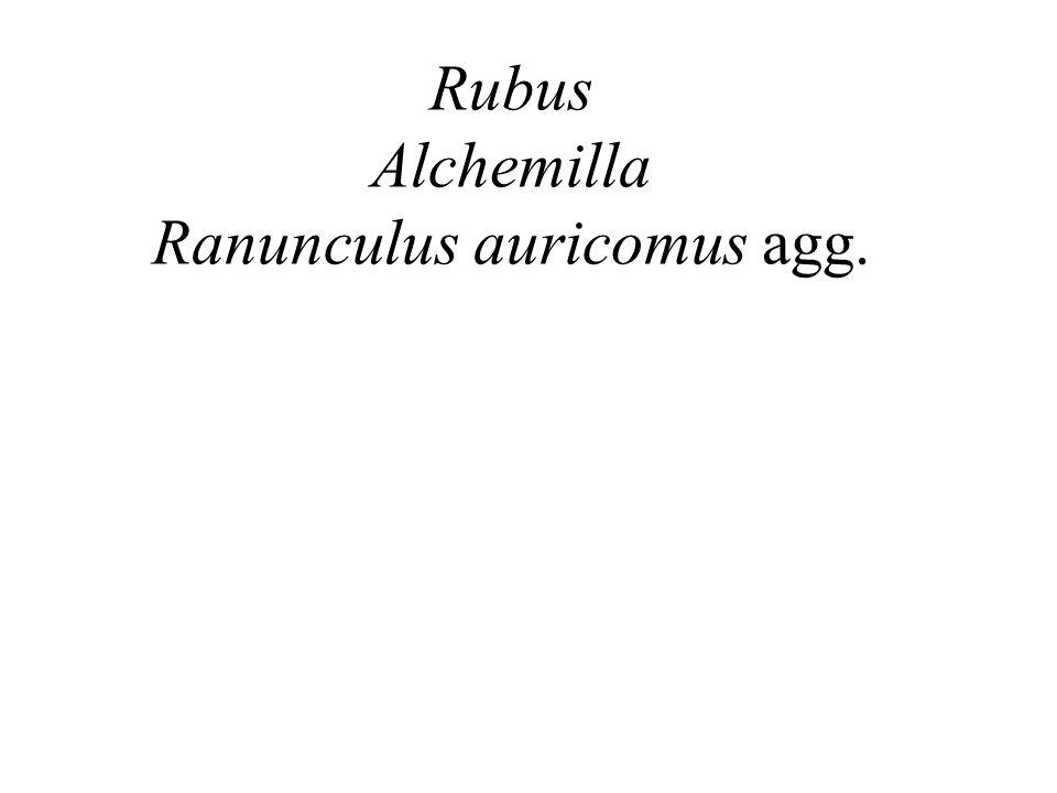 Rubus Alchemilla Ranunculus auricomus agg.