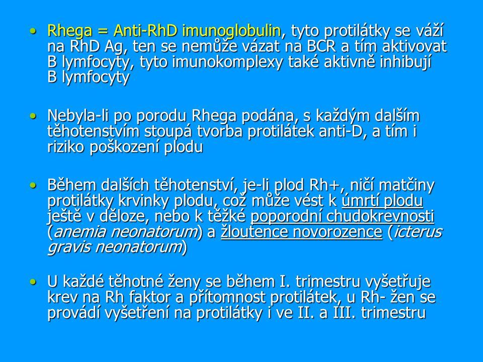 Rhega = Anti-RhD imunoglobulin, tyto protilátky se váží na RhD Ag, ten se nemůže vázat na BCR a tím aktivovat B lymfocyty, tyto imunokomplexy také aktivně inhibují B lymfocytyRhega = Anti-RhD imunoglobulin, tyto protilátky se váží na RhD Ag, ten se nemůže vázat na BCR a tím aktivovat B lymfocyty, tyto imunokomplexy také aktivně inhibují B lymfocyty Nebyla-li po porodu Rhega podána, s každým dalším těhotenstvím stoupá tvorba protilátek anti-D, a tím i riziko poškození ploduNebyla-li po porodu Rhega podána, s každým dalším těhotenstvím stoupá tvorba protilátek anti-D, a tím i riziko poškození plodu Během dalších těhotenství, je-li plod Rh+, ničí matčiny protilátky krvinky plodu, což může vést k úmrtí plodu ještě v děloze, nebo k těžké poporodní chudokrevnosti (anemia neonatorum) a žloutence novorozence (icterus gravis neonatorum)Během dalších těhotenství, je-li plod Rh+, ničí matčiny protilátky krvinky plodu, což může vést k úmrtí plodu ještě v děloze, nebo k těžké poporodní chudokrevnosti (anemia neonatorum) a žloutence novorozence (icterus gravis neonatorum) U každé těhotné ženy se během I.