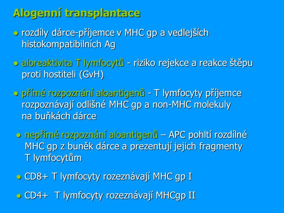 Alogenní transplantace ● rozdíly dárce-příjemce v MHC gp a vedlejších histokompatibilních Ag ● aloreaktivita T lymfocytů - riziko rejekce a reakce ště