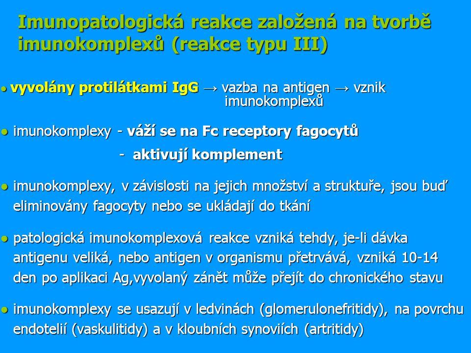 ● vyvolány protilátkami IgG → vazba na antigen → vznik imunokomplexů ● imunokomplexy - váží se na Fc receptory fagocytů - aktivují komplement - aktivují komplement ● imunokomplexy, v závislosti na jejich množství a struktuře, jsou buď eliminovány fagocyty nebo se ukládají do tkání ● patologická imunokomplexová reakce vzniká tehdy, je-li dávka antigenu veliká, nebo antigen v organismu přetrvává, vzniká 10-14 den po aplikaci Ag,vyvolaný zánět může přejít do chronického stavu ● imunokomplexy se usazují v ledvinách (glomerulonefritidy), na povrchu endotelií (vaskulitidy) a v kloubních synoviích (artritidy) Imunopatologická reakce založená na tvorbě imunokomplexů (reakce typu III)