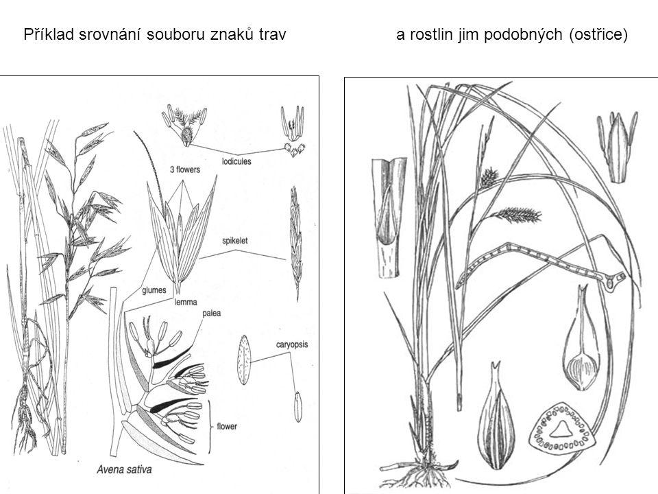 Příklad srovnání souboru znaků trav a rostlin jim podobných (ostřice)