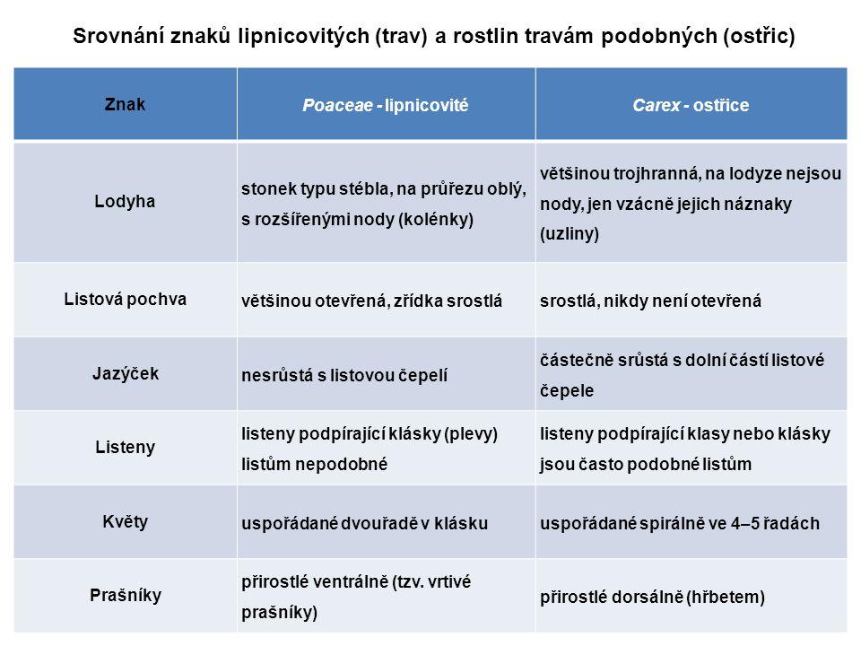 Srovnání znaků lipnicovitých (trav) a rostlin travám podobných (ostřic) Znak Poaceae - lipnicovitéCarex - ostřice Lodyha stonek typu stébla, na průřez