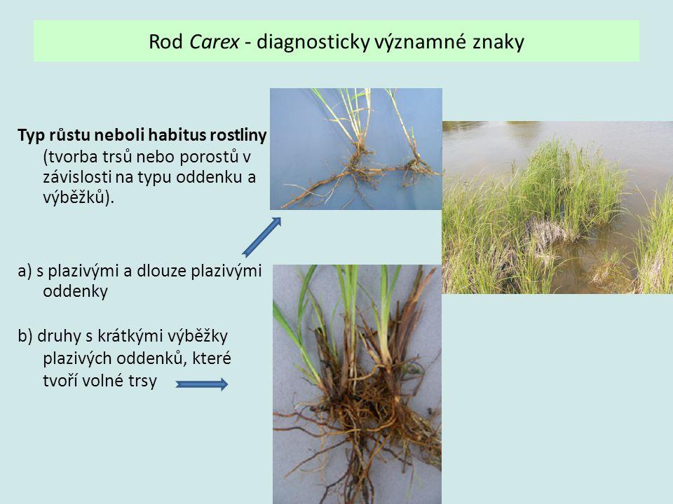 Rod Carex - diagnosticky významné znaky Typ růstu neboli habitus rostliny (tvorba trsů nebo porostů v závislosti na typu oddenku a výběžků). a) s plaz