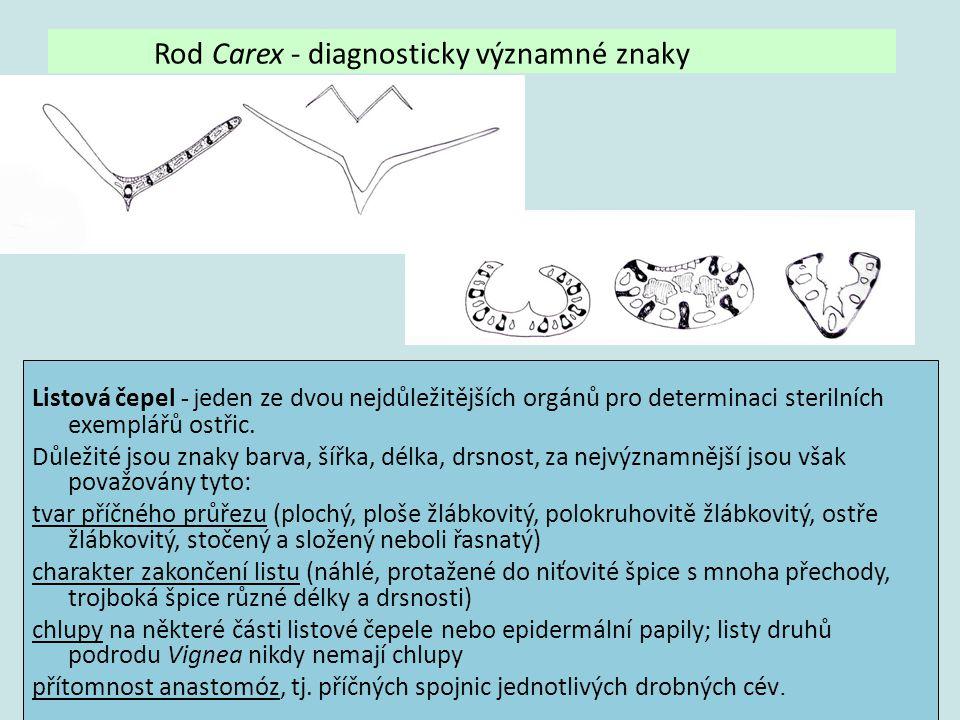 Listová čepel - j eden ze dvou nejdůležitějších orgánů pro determinaci sterilních exemplářů ostřic. Důležité jsou znaky barva, šířka, délka, drsnost,