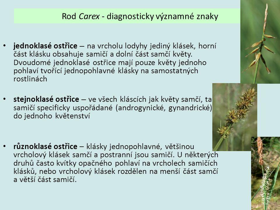 Rod Carex - diagnosticky významné znaky jednoklasé ostřice – na vrcholu lodyhy jediný klásek, horní část klásku obsahuje samičí a dolní část samčí kvě
