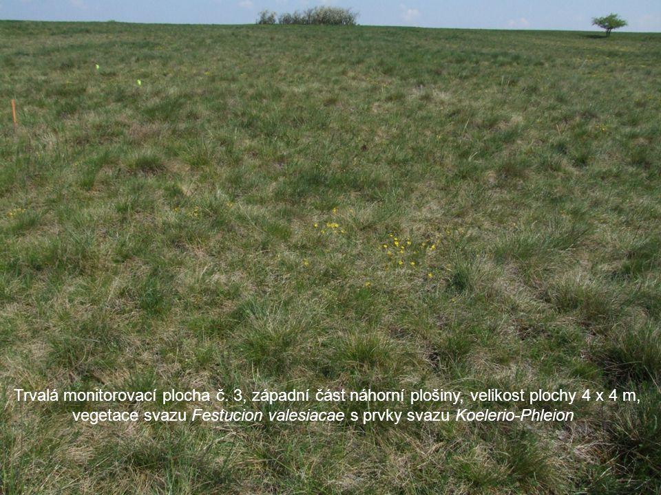 Trvalá monitorovací plocha č. 3, západní část náhorní plošiny, velikost plochy 4 x 4 m, vegetace svazu Festucion valesiacae s prvky svazu Koelerio-Phl