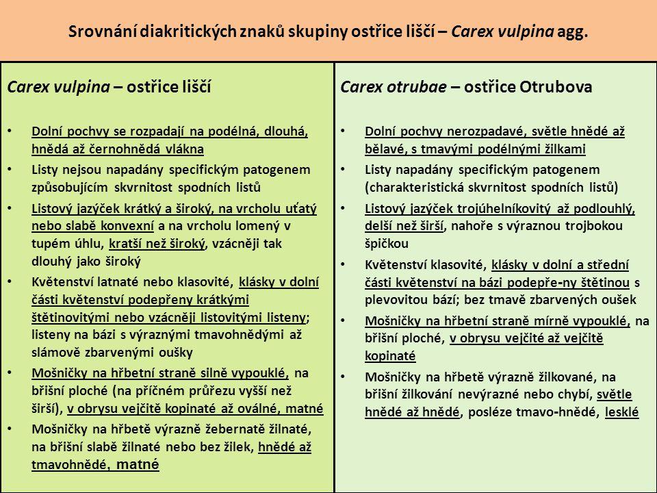 Srovnání diakritických znaků skupiny ostřice liščí – Carex vulpina agg. Carex vulpina – ostřice liščí Dolní pochvy se rozpadají na podélná, dlouhá, hn