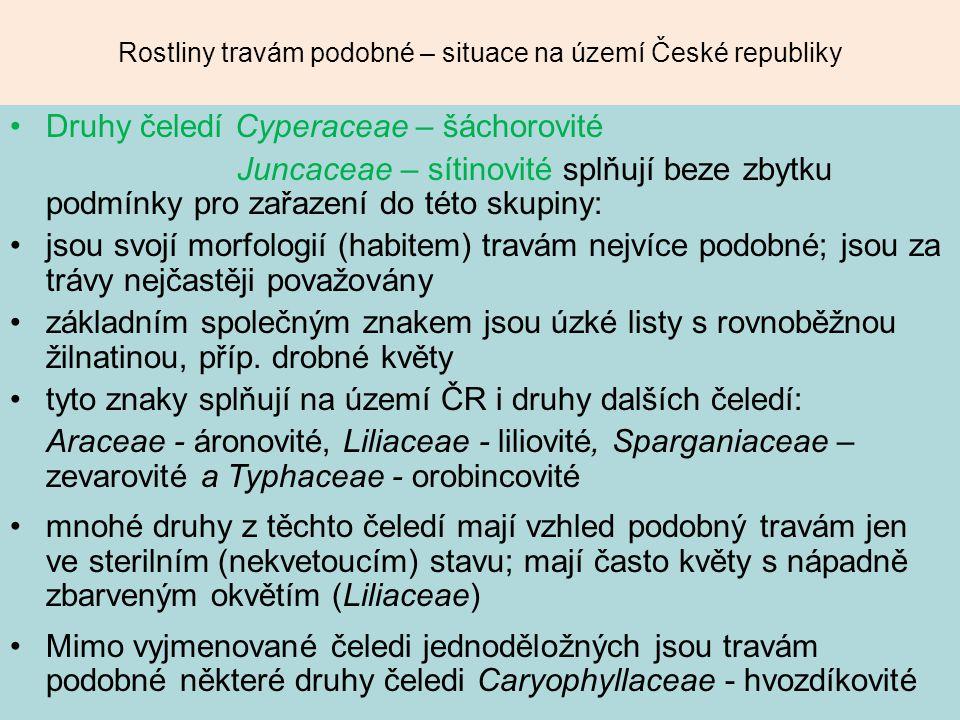 Rostliny travám podobné – situace na území České republiky Druhy čeledí Cyperaceae – šáchorovité Juncaceae – sítinovité splňují beze zbytku podmínky p