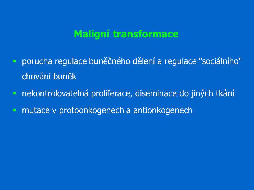 Maligní transformace  porucha regulace buněčného dělení a regulace