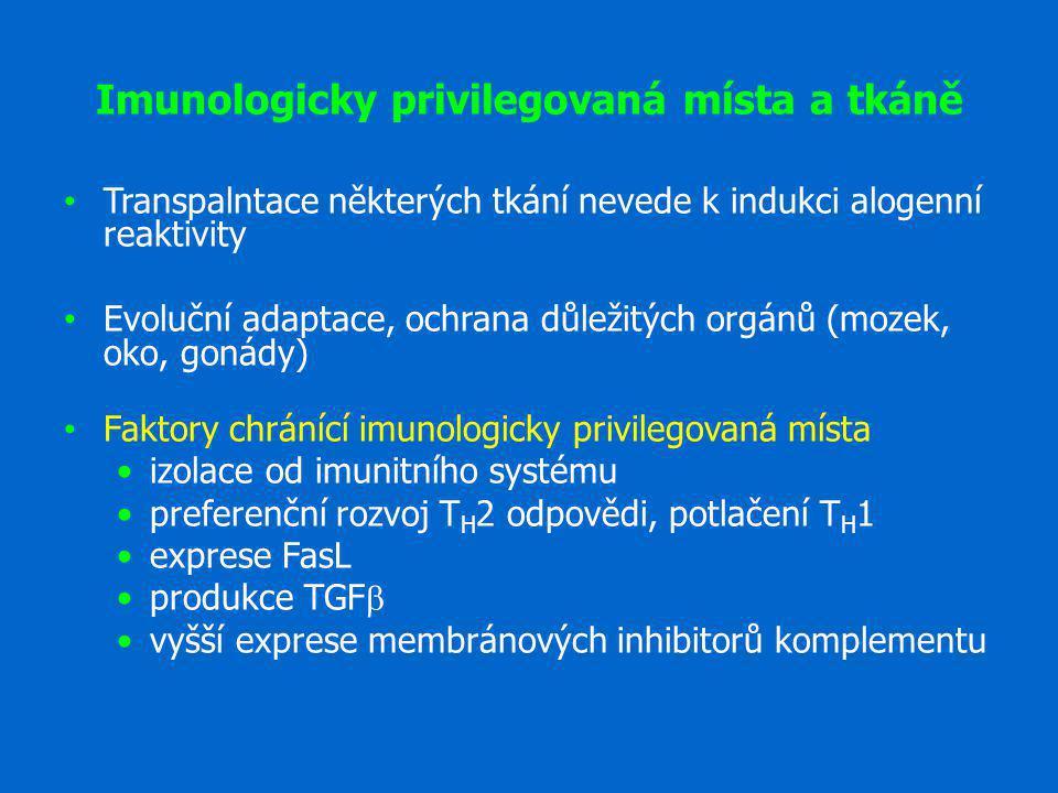 Imunologicky privilegovaná místa a tkáně Transpalntace některých tkání nevede k indukci alogenní reaktivity Evoluční adaptace, ochrana důležitých orgá
