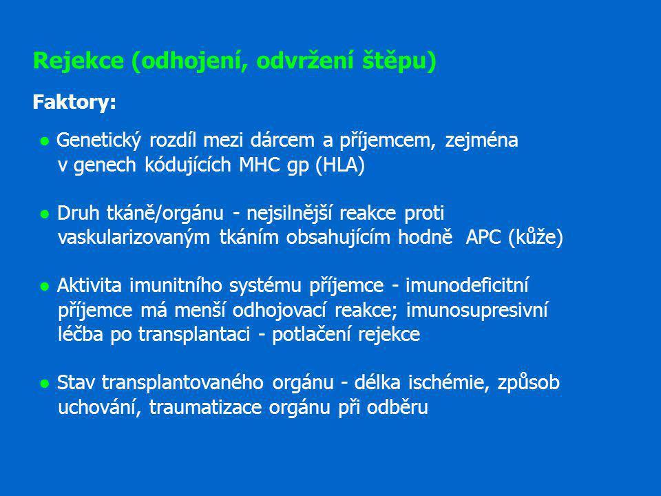 Rejekce (odhojení, odvržení štěpu) Faktory: ● Genetický rozdíl mezi dárcem a příjemcem, zejména v genech kódujících MHC gp (HLA) ● Druh tkáně/orgánu -