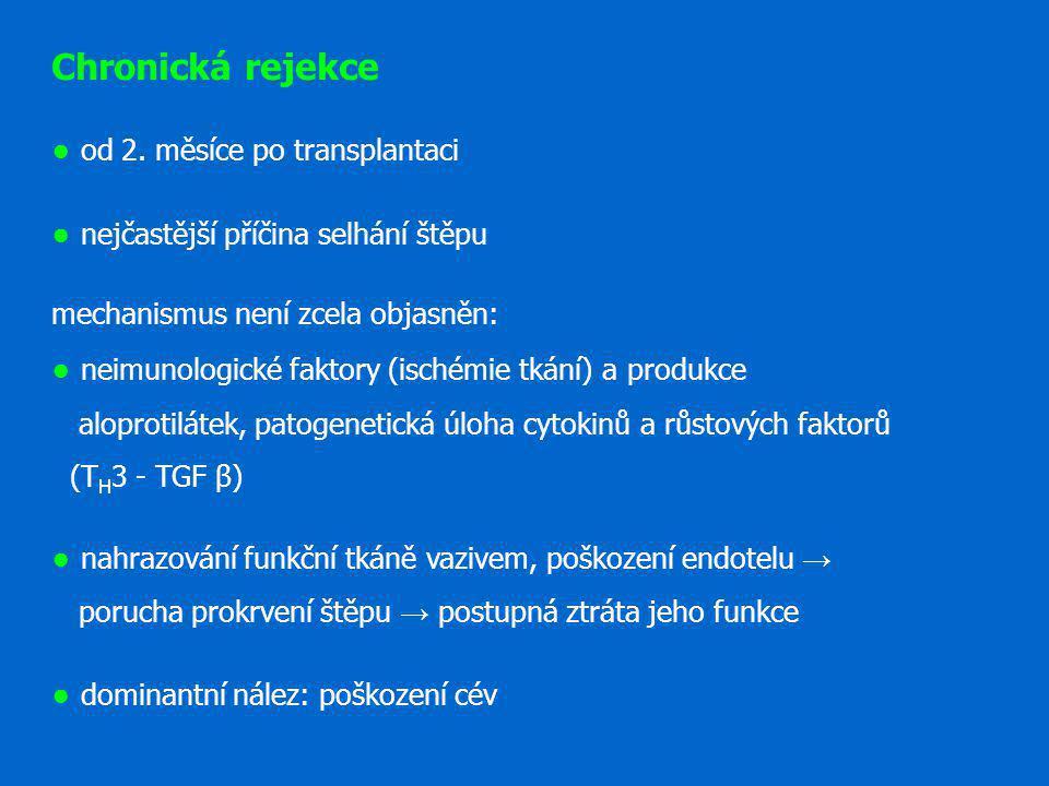 Chronická rejekce ● od 2. měsíce po transplantaci ● nejčastější příčina selhání štěpu mechanismus není zcela objasněn: ● neimunologické faktory (isché