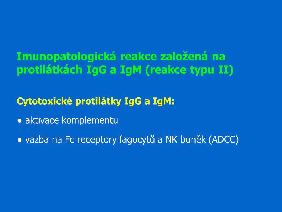 Imunopatologická reakce založená na protilátkách IgG a IgM (reakce typu II) Cytotoxické protilátky IgG a IgM: ● aktivace komplementu ● vazba na Fc rec