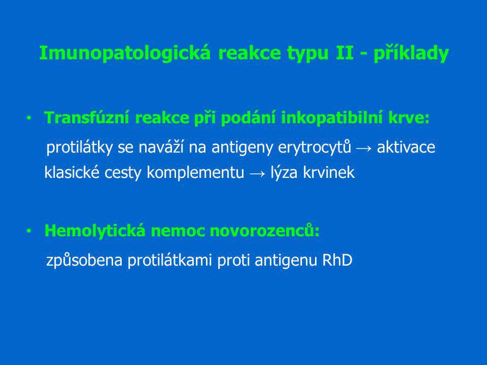 Imunopatologická reakce typu II - příklady Transfúzní reakce při podání inkopatibilní krve: protilátky se naváží na antigeny erytrocytů → aktivace kla