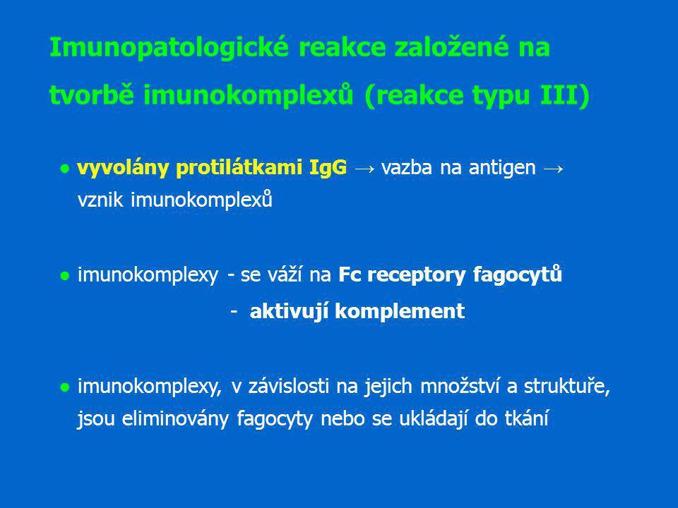 ● vyvolány protilátkami IgG → vazba na antigen → vznik imunokomplexů ● imunokomplexy - se váží na Fc receptory fagocytů - aktivují komplement ● imunok