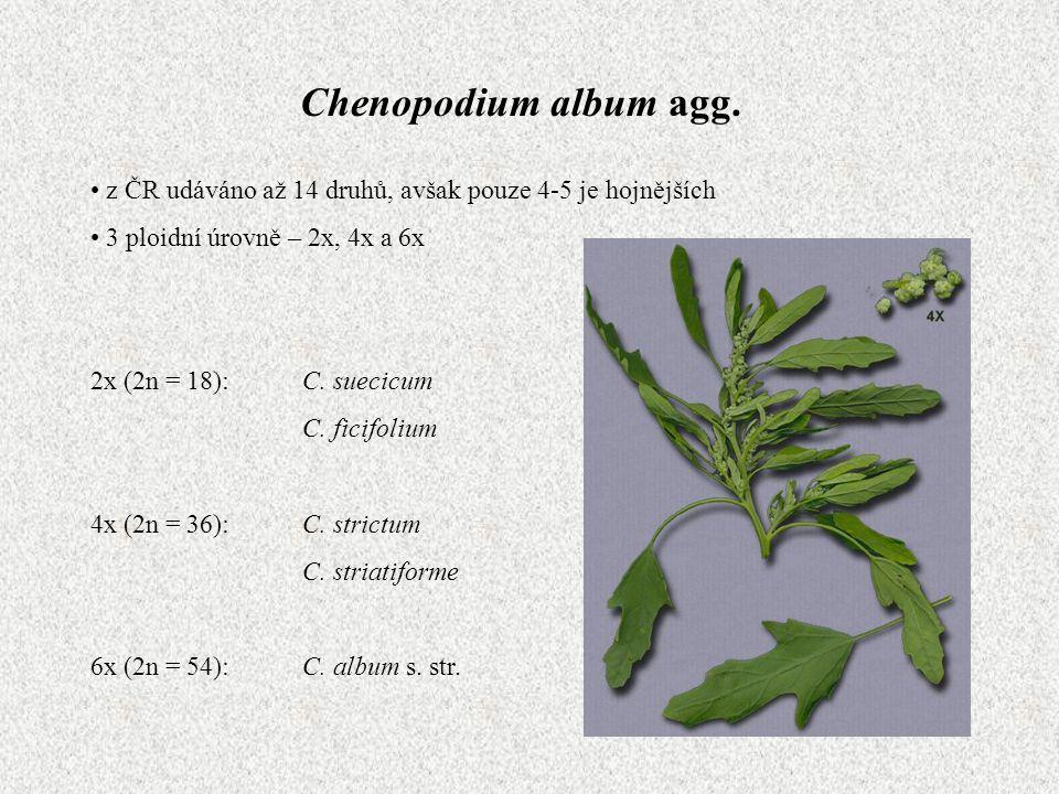 Chenopodium album agg. z ČR udáváno až 14 druhů, avšak pouze 4-5 je hojnějších 3 ploidní úrovně – 2x, 4x a 6x 2x (2n = 18):C. suecicum C. ficifolium 4