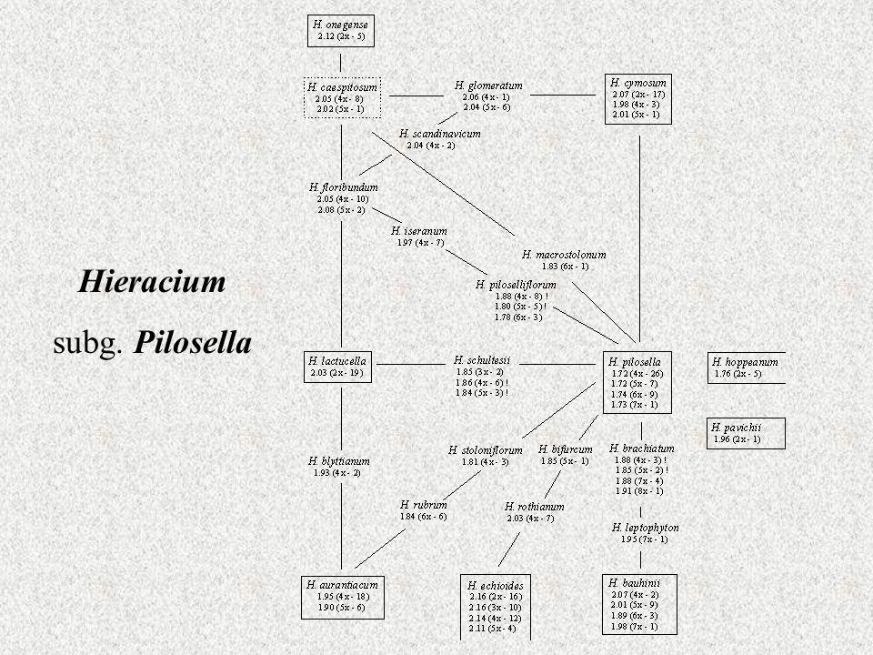 Hieracium subg. Pilosella