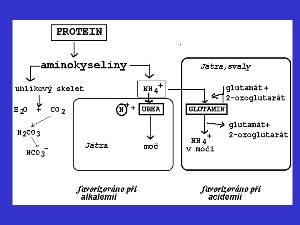 JÁTRA (biotransformace) Varianty superfamilie enzymů cytochromu P-450 (CYP) * pomalí * rychlí * velmi rychlí metabolizátoři ……………………………………………. CYP2C19