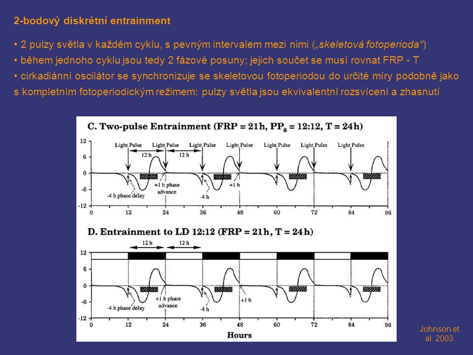 """2-bodový diskrétní entrainment 2 pulzy světla v každém cyklu, s pevným intervalem mezi nimi (""""skeletová fotoperioda"""") během jednoho cyklu jsou tedy 2"""