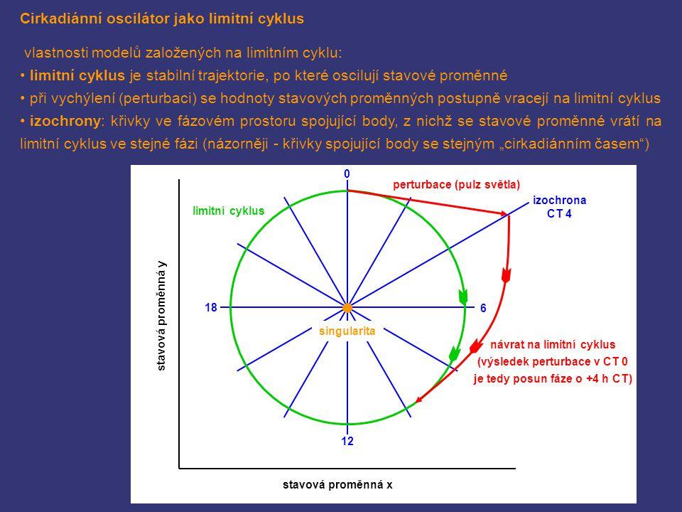 Cirkadiánní oscilátor jako limitní cyklus vlastnosti modelů založených na limitním cyklu: limitní cyklus je stabilní trajektorie, po které oscilují st