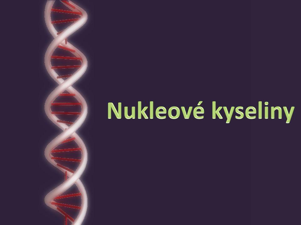 biochemické makromolekulární látky tvoří řetězce ve své struktuře uchovávají genetické informace součást prakticky všech buněk objeveny roku 1868, izolovány koncem 19.