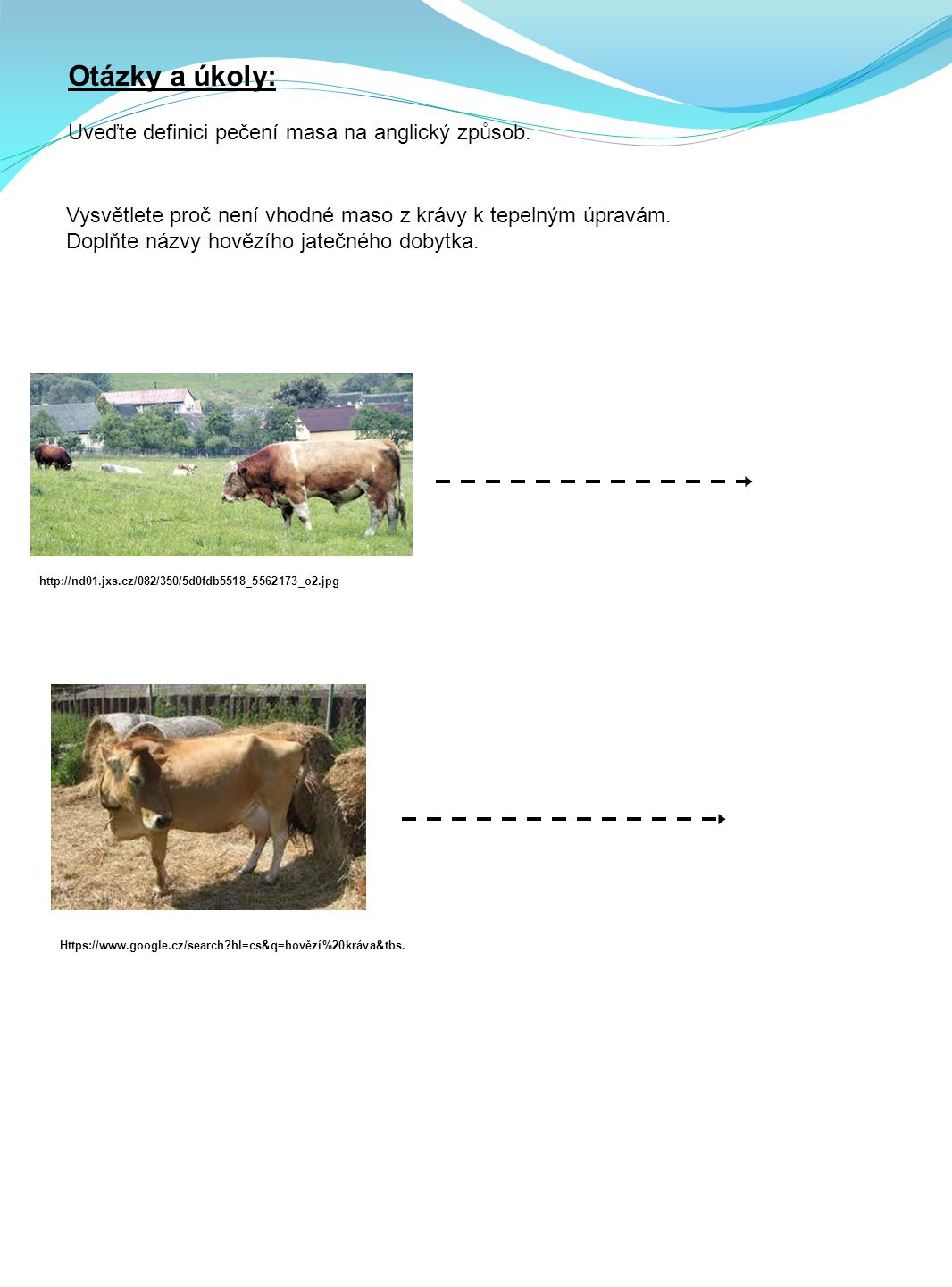 Vysvětlete proč není vhodné maso z krávy k tepelným úpravám.