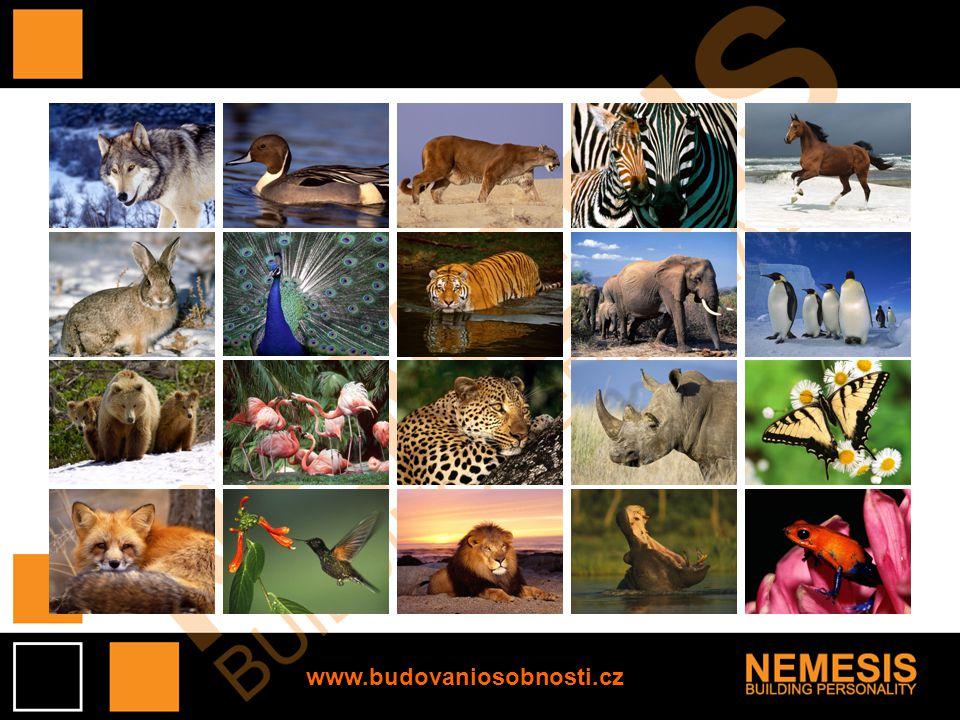 Vyhodnocení: 16 zvířat: Vaše fotografická paměť je excelentní.