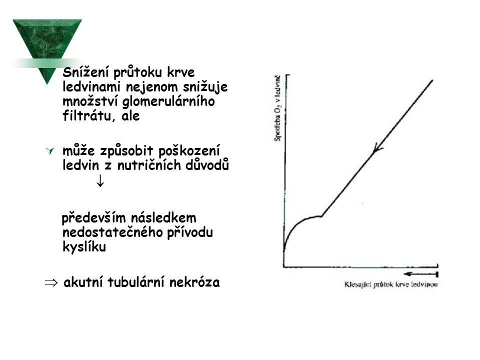  Snížení průtoku krve ledvinami nejenom snižuje množství glomerulárního filtrátu, ale  může způsobit poškození ledvin z nutričních důvodů  předevší