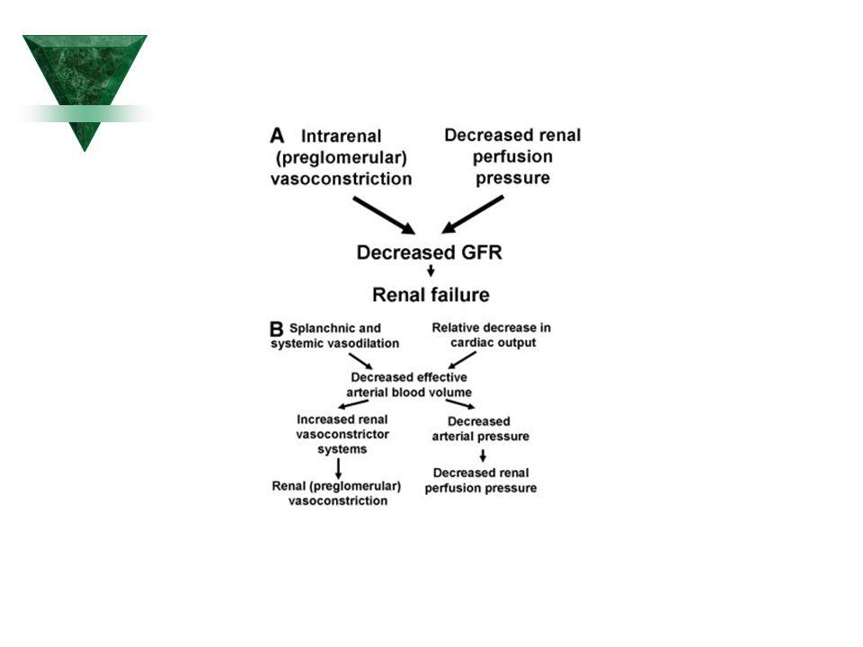 Předpokládané mechanismy akce analogů vazopresinu (ornipressin, Terlipressin) u pacientů s 1.