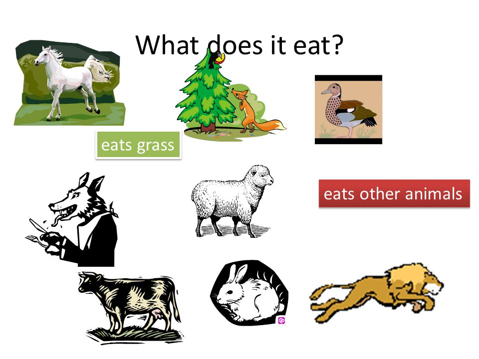 What does it eat eats grass eats other animals