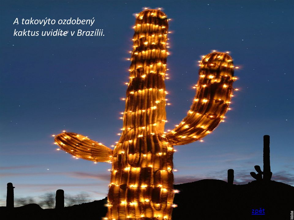 A takovýto ozdobený kaktus uvidíte v Brazílii. zpět