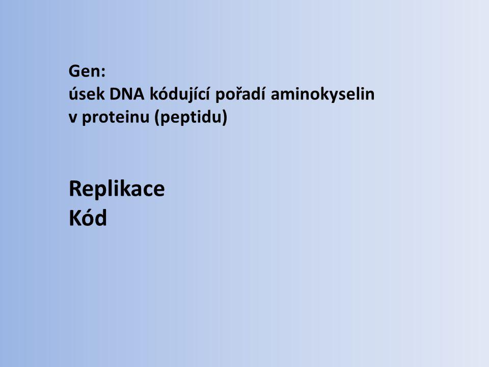 Gen: úsek DNA kódující pořadí aminokyselin v proteinu (peptidu) Replikace Kód