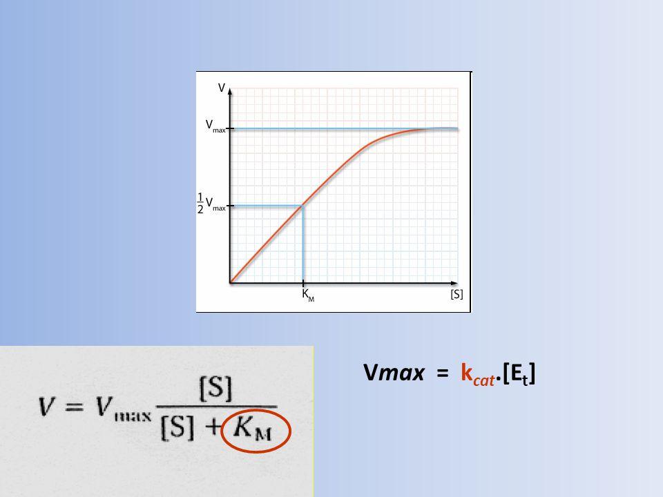 Rychlost reakce je tedy funkcí koncentrací substrátu reakce [S] a efektivní koncentrace enzymu [Et]: v = k cat.[Et].[S] / (K M + [S]) Jestliže [S] << K M (běžný případ, K M se pohybuje v rozmezí 1- 100[S]), pak v = [Et].[S].k cat /K M Obě konstanty - K M a k cat - souvisí s nutností udržet kompromis mezi rigiditou molekuly proteinu a její flexibilitou.