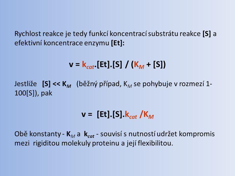 Rychlost reakce je tedy funkcí koncentrací substrátu reakce [S] a efektivní koncentrace enzymu [Et]: v = k cat.[Et].[S] / (K M + [S]) Jestliže [S] <<