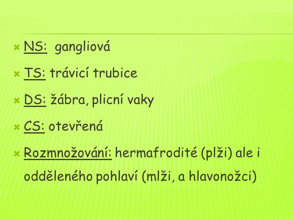  NS: gangliová  TS: trávicí trubice  DS: žábra, plicní vaky  CS: otevřená  Rozmnožování: hermafrodité (plži) ale i odděleného pohlaví (mlži, a hlavonožci)