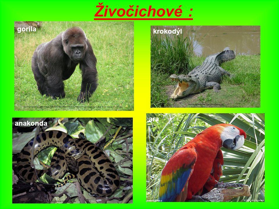 Živočichové : gorila https://akela.mendelu.cz/~xjochman/krokodyl.jpg krokodýl gorila http://img4.rajce.idnes.cz/d0410/2/2617/2617058_19ab5f8a7417d832d4371a224b577bbd/images/Gorila-ZOO_Dvur_Kralove_n.L._011.jpg anakonda http://www.biolib.cz/IMG/GAL/14267.jpg ara http://petulina.euweb.cz/obrazky/37/ara.jpg