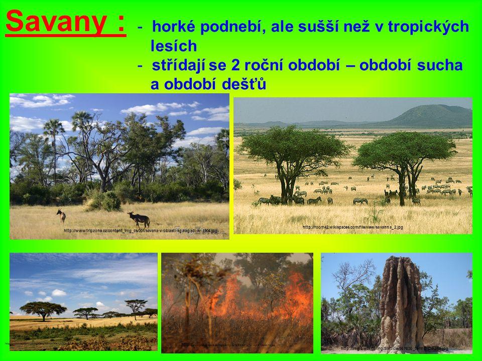 http://www.ideje.cz/uploads/image/data/695.jpg http://www.biolib.cz/IMG/GAL/76838.jpg antilopa losí slon africký http://nd04.jxs.cz/850/734/f90036af10_73480415_o2.jpg nosorožec tuponosý zebra Grévyho http://nd03.jxs.cz/410/271/fefd6d2a34_61767643_o2.jpg