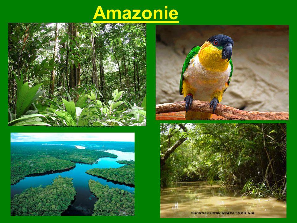 Amazonie http://www.brazilie-informace.cz/img/amazonsky_prales.jpg http://image.tvnoviny.sk/media/images/original/Nov2010/2192108.jpg http://www.irece