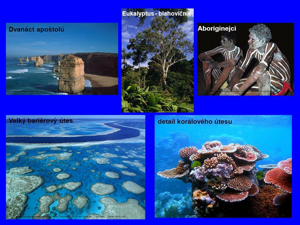 http://www.heilpflanzen-suchmaschine.de/eucalyptus/Eucalyptus-eucalyptus-sp-4.jpg Eukalyptus - blahovičník http://thenewwriters.files.wordpress.com/20