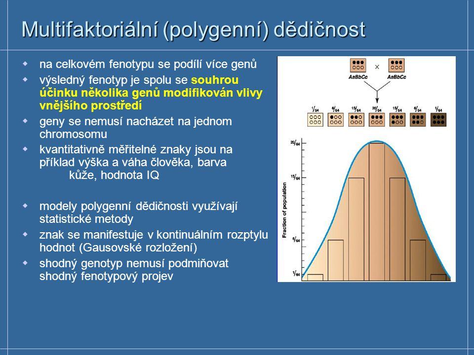 Multifaktoriální (polygenní) dědičnost  na celkovém fenotypu se podílí více genů  výsledný fenotyp je spolu se souhrou účinku několika genů modifiko