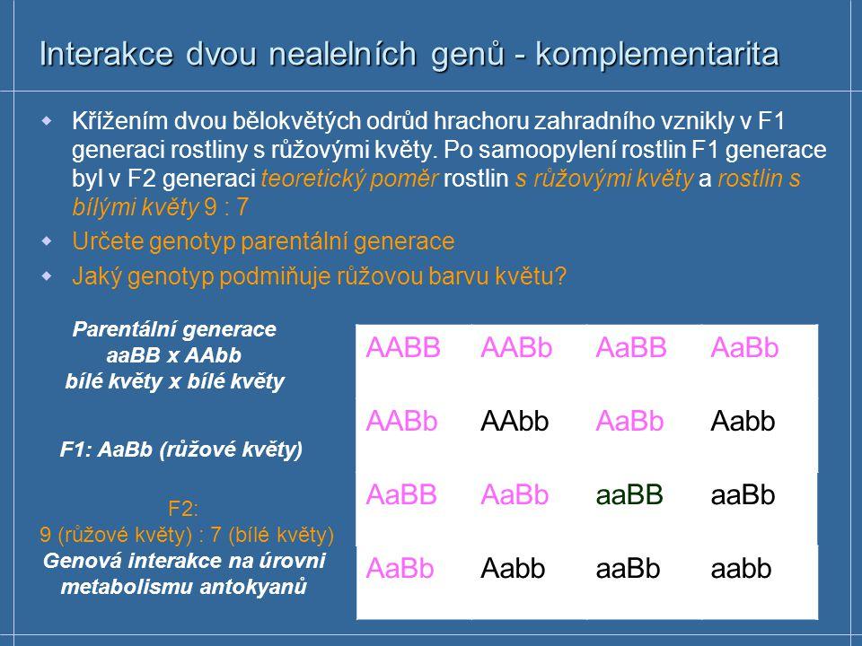 Interakce nealelních genů – recesivní epistáze Tvorba pigmentu potkana je podmíněna chromogenem C, determinujícím enzym tyrosinasu Recesivní homozygoti (cc) netvoří melanin (albíni) Barvu srsti podmiňuje gen B; černou alela B, hnědou b V parentální generaci jsme křížili potkany s černou srstí s albíny Stanovte fenotyp F1 generace a fenotypové štěpné poměry F2 generace CCBBCCBbCcBBCcBb CCBbCCbbCcBbCcbb CcBBCcBbccBBccBb CcBbCcbbccBbccbb F1 – CcBb (černí) F2 – 9:3:4