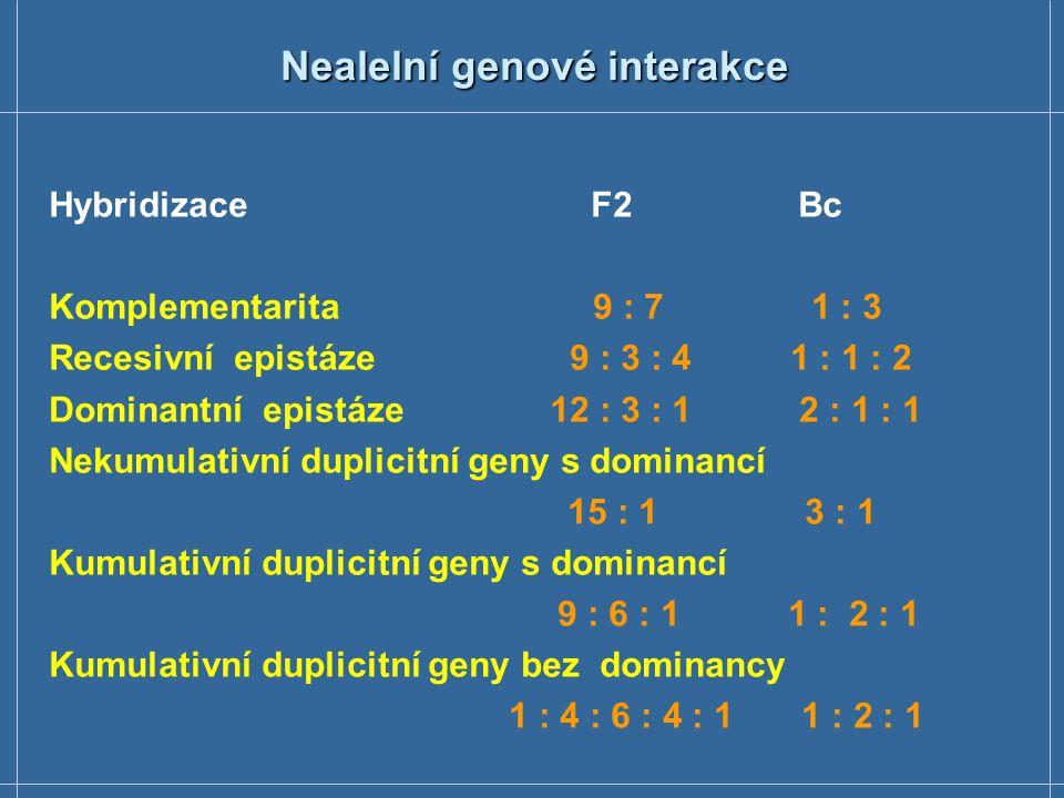 Nealelní genové interakce Hybridizace F2 Bc Komplementarita 9 : 7 1 : 3 Recesivní epistáze 9 : 3 : 4 1 : 1 : 2 Dominantní epistáze 12 : 3 : 1 2 : 1 :