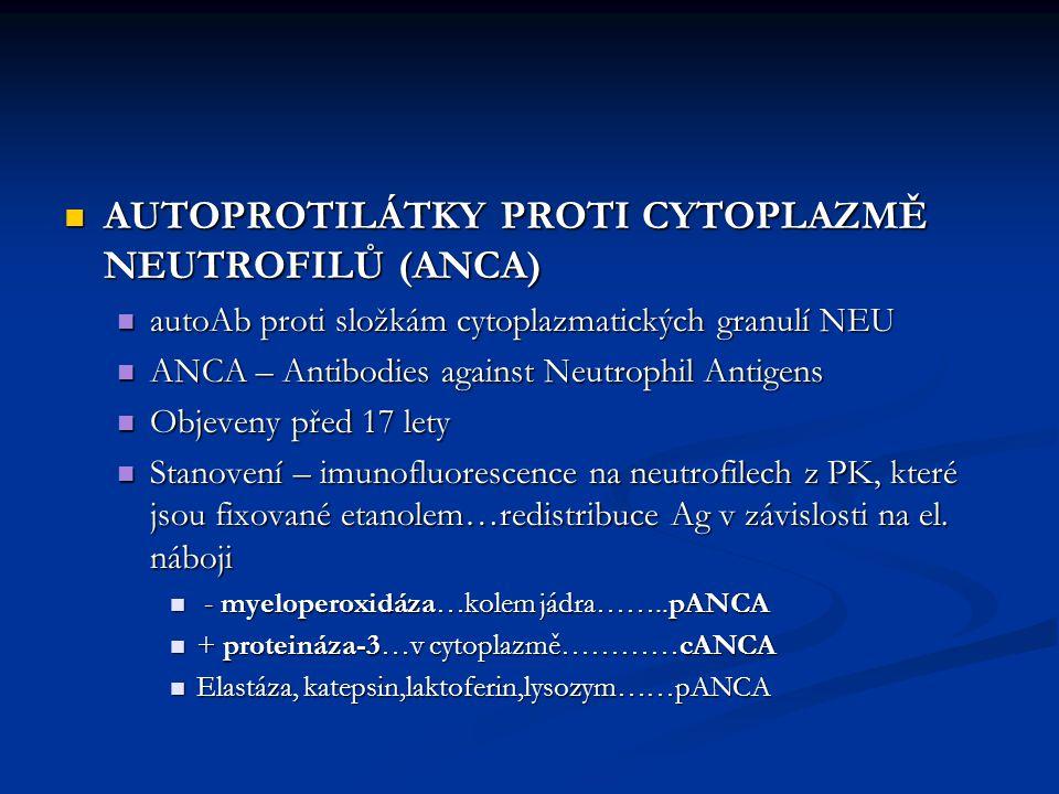 AUTOPROTILÁTKY PROTI CYTOPLAZMĚ NEUTROFILŮ (ANCA) AUTOPROTILÁTKY PROTI CYTOPLAZMĚ NEUTROFILŮ (ANCA) autoAb proti složkám cytoplazmatických granulí NEU