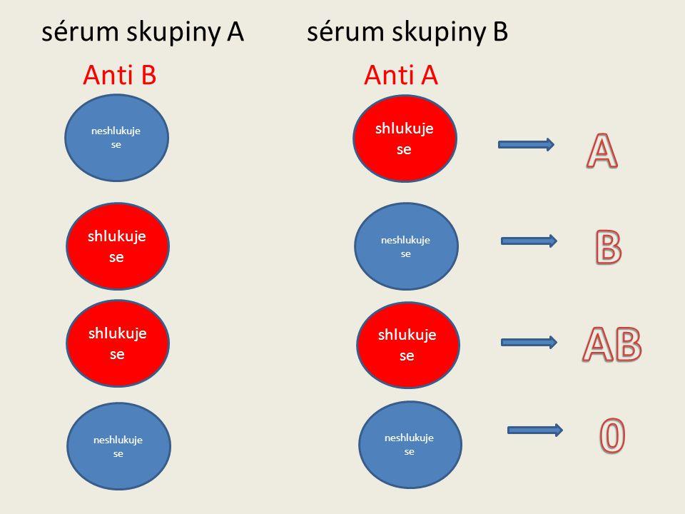 JAK SE ZJIŠŤUJE KREVNÍ SKUPINA Na základě shlukování testované krve v kapkách krevního séra daných skupin (sérum + testovaná krev).