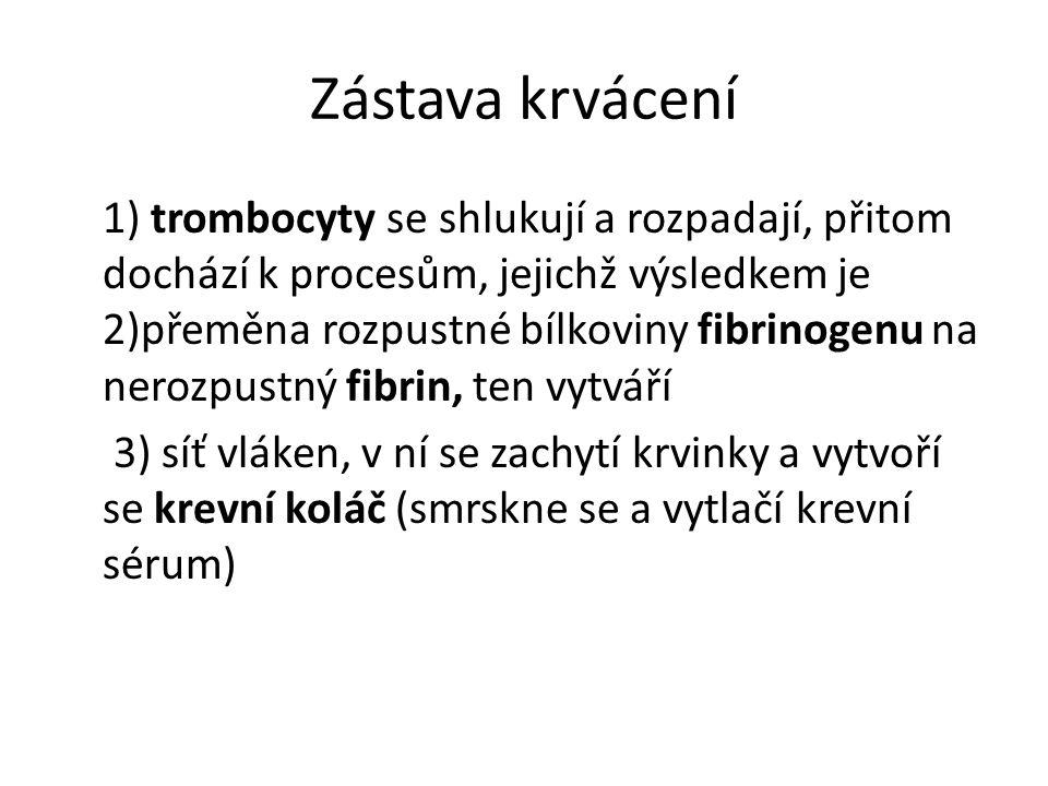 Zástava krvácení 1) trombocyty se shlukují a rozpadají, přitom dochází k procesům, jejichž výsledkem je 2)přeměna rozpustné bílkoviny fibrinogenu na n