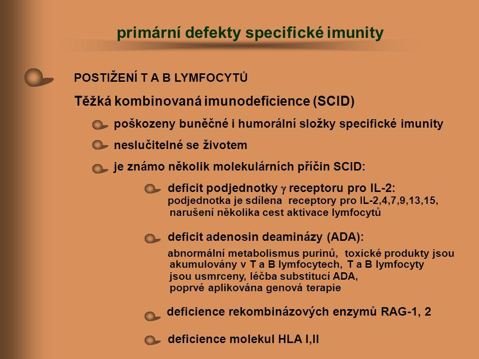 POSTIŽENÍ T A B LYMFOCYTŮ Těžká kombinovaná imunodeficience (SCID) poškozeny buněčné i humorální složky specifické imunity neslučitelné se životem je