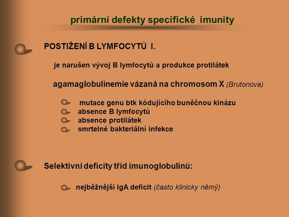 POSTIŽENÍ B LYMFOCYTŮ I. je narušen vývoj B lymfocytů a produkce protilátek agamaglobulinemie vázaná na chromosom X (Brutonova) mutace genu btk kódují