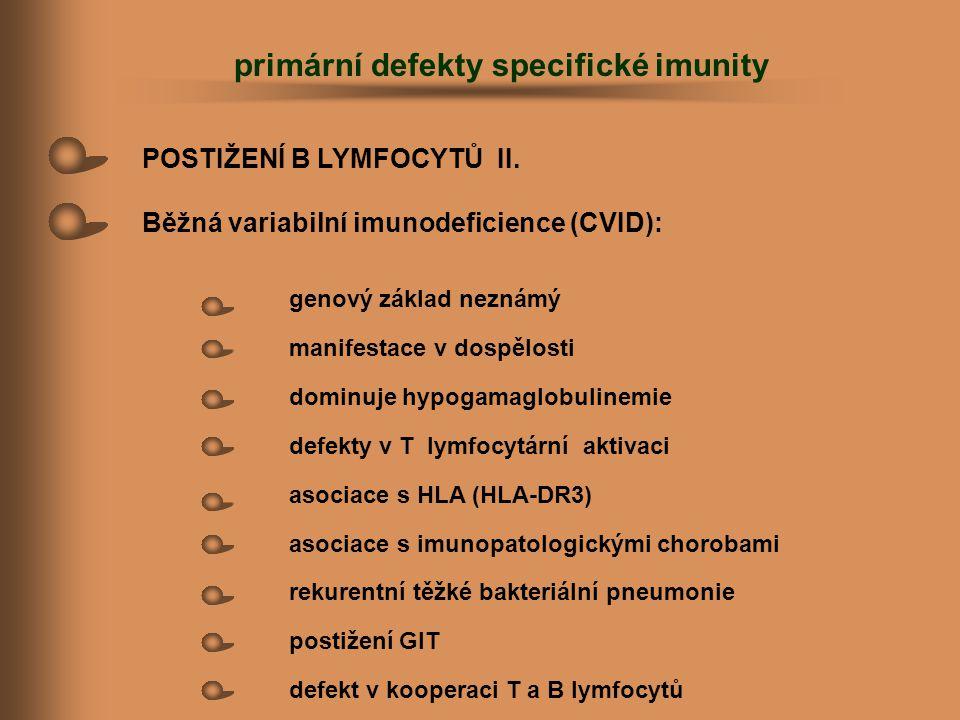 POSTIŽENÍ B LYMFOCYTŮ II. Běžná variabilní imunodeficience (CVID): genový základ neznámý manifestace v dospělosti dominuje hypogamaglobulinemie defekt