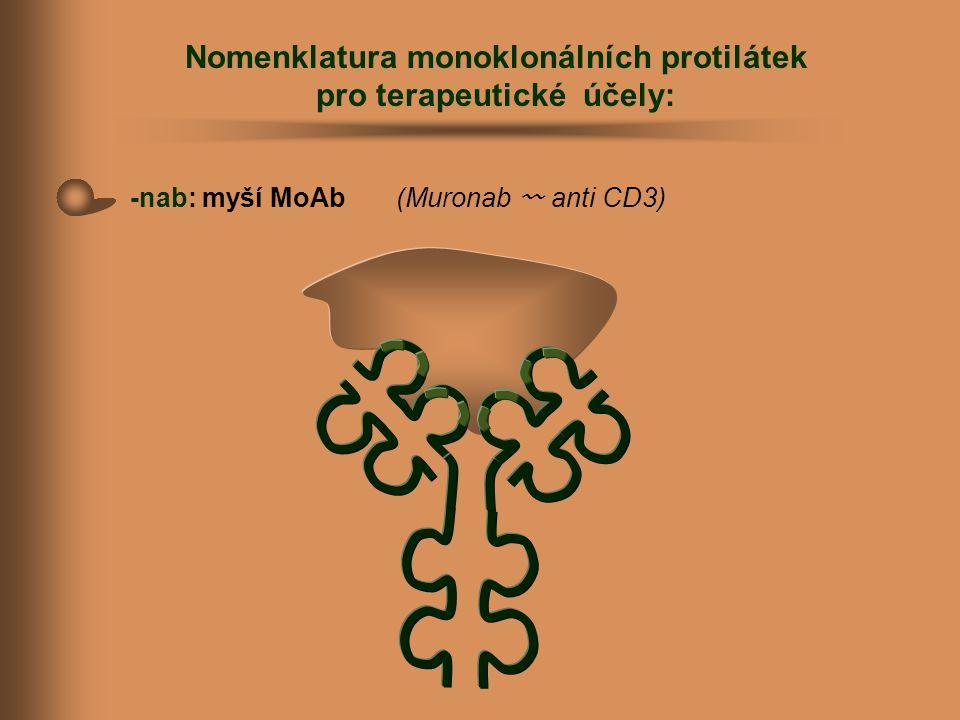 Nomenklatura monoklonálních protilátek pro terapeutické účely: -nab: myší MoAb (Muronab 〰 anti CD3)